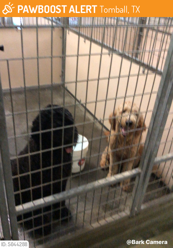 Rehomed Male Dog in Tomball, TX 77375 (ID: 5044288) | PawBoost