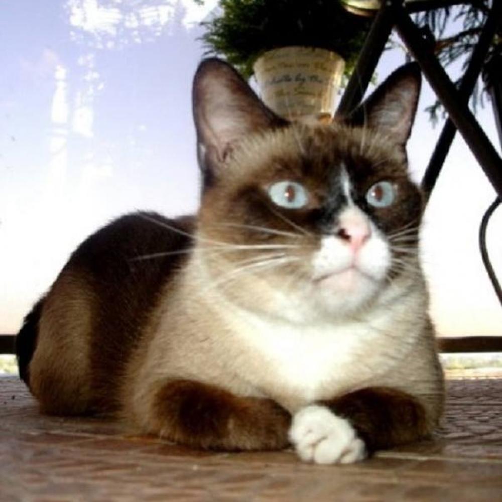 Lost Male Cat last seen Near SW 16th Ct & SW 17th St, Fort Lauderdale, FL 33312