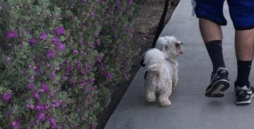 Lost Male Dog last seen Near Trooper Way, Bakersfield, CA  93306, Bakersfield, CA 93306