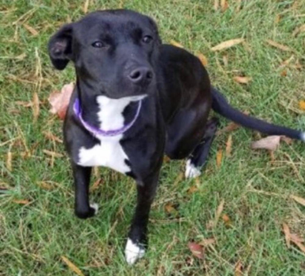 Lost Female Dog last seen Near E Hil Mar Cir & N Hil Mar Cir, District Heights, MD 20747