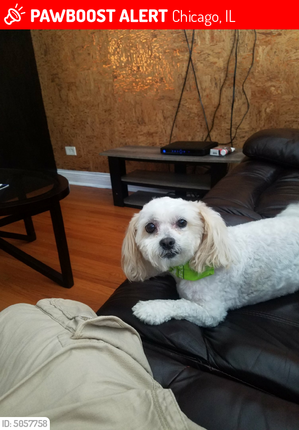 Lost Male Dog last seen Near W 55th St & S Harding Ave, Chicago, IL 60632