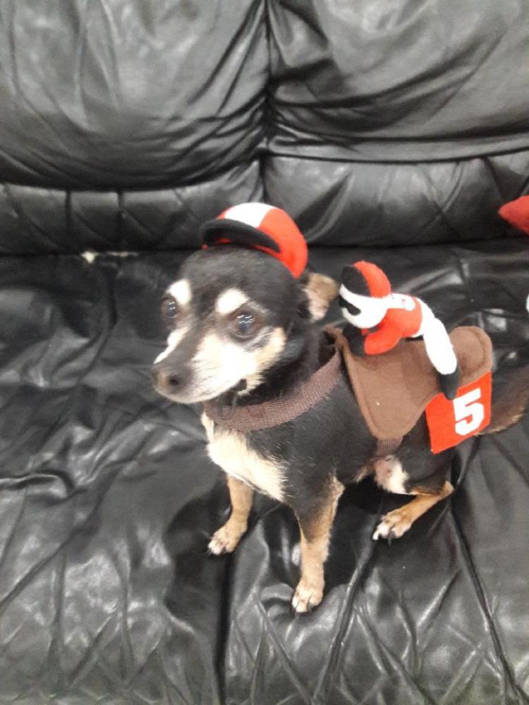 Lost Male Dog last seen Near griffing  blvd, biscayne park, fl 33161, North Miami Beach, FL 33162