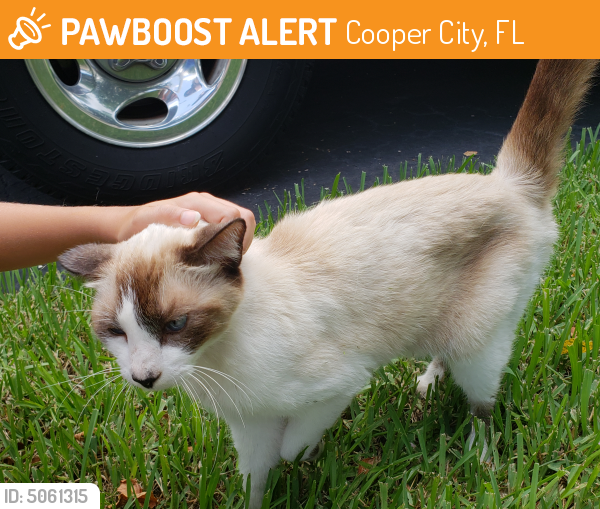 Rehomed Female Cat last seen Near SW 53rd Ct & SW 102nd Ave, Cooper City, FL 33328