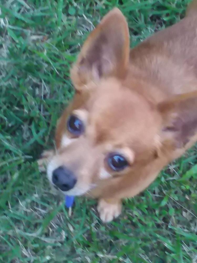 Lost Male Dog last seen Near Kilauea Ave & Hoku St, Hilo, HI 96720