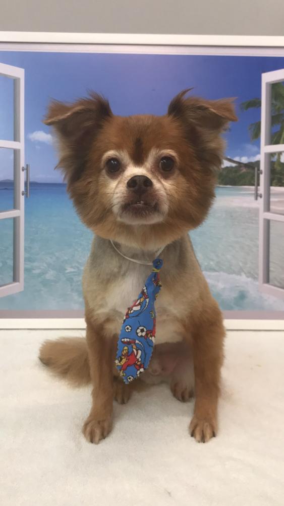 Lost Male Dog last seen Near NW 152nd Ter & NW 24th Ave, Opa-locka, FL 33054