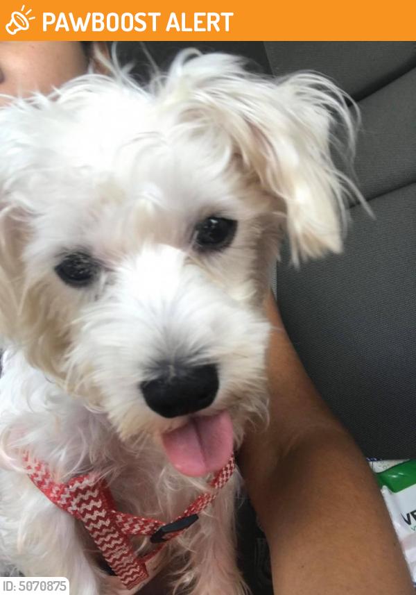 Found/Stray Male Dog last seen Near SW 17th St & SW 70th Way, North Lauderdale, FL 33068