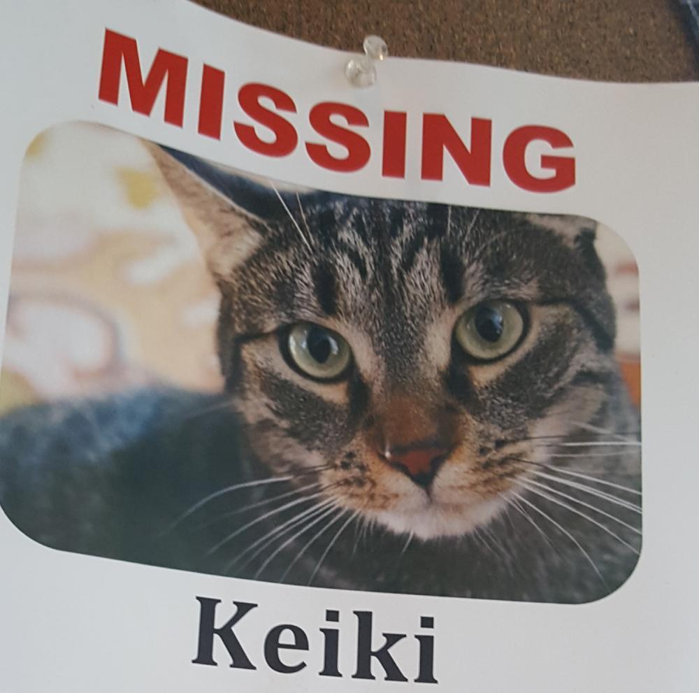 Lost Female Cat last seen Near East Elm Street, Conshohocken, PA, USA, Conshohocken, PA 19428