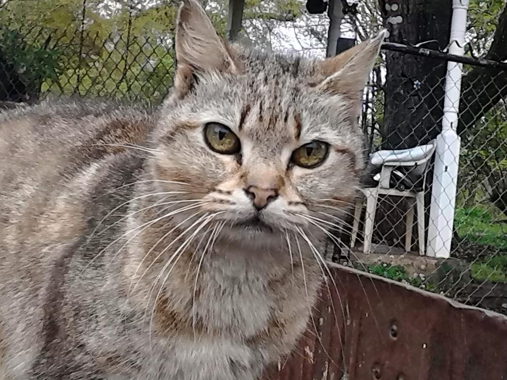 Lost Female Cat last seen Whitehall Rd and South Milledge Ave., Athens, GA 30605
