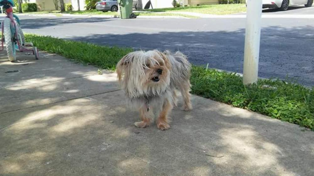 Lost Female Dog last seen Near NW 5th St & NW 207th Ter, Pembroke Pines, FL 33029