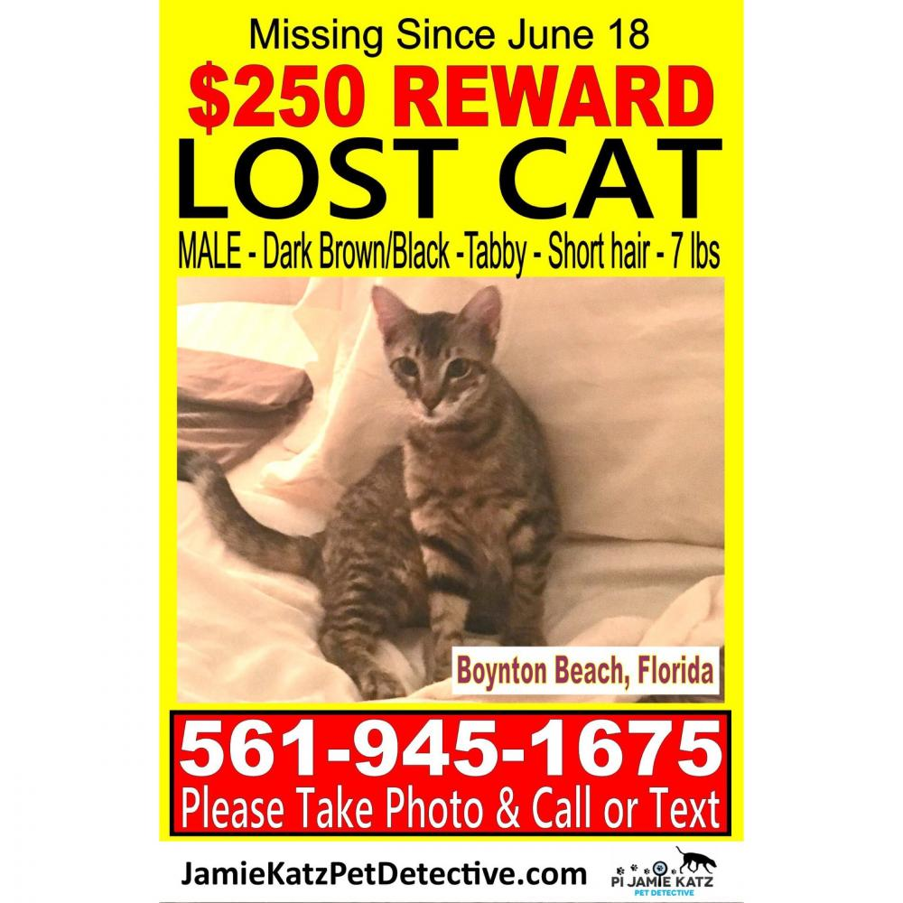 Lost Male Cat last seen Near Congress Ave & SW 27th Ave, Boynton Beach, FL 33425