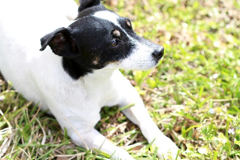 Lost Male Dog last seen Near NW 61st Ct S, Hialeah, FL, USA, Hialeah, FL 33015