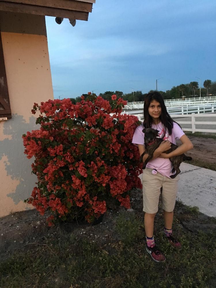 Lost Male Dog last seen Near Lyons Rd, Boynton Beach, FL, USA, Boynton Beach, FL 33472