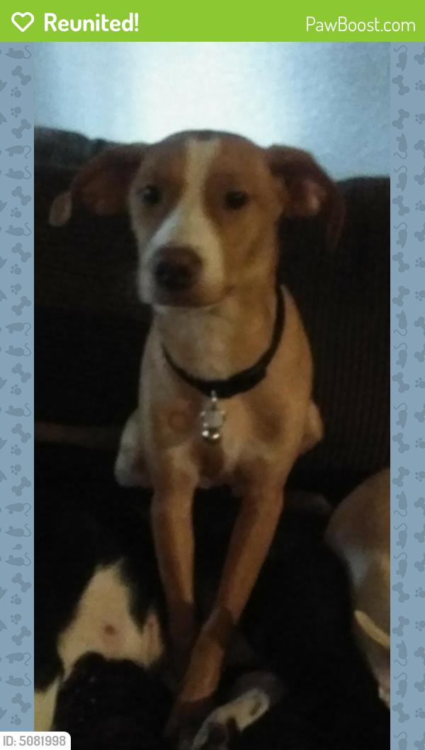 Reunited Male Dog last seen Near Braesmont Dr & N Braeswood Blvd, Houston, TX 77096