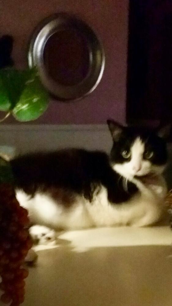 Lost Female Cat last seen Near Marionette Dr & Cedar Glen Dr, Baton Rouge, LA 70811