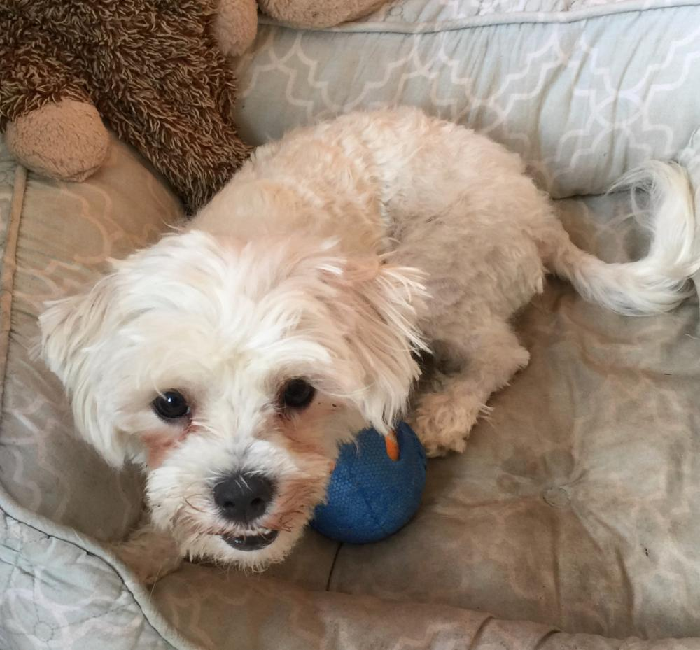 Lost Female Dog last seen Near sw 17th st, fort lauderdale Fl, 33317, Fort Lauderdale, FL 33317