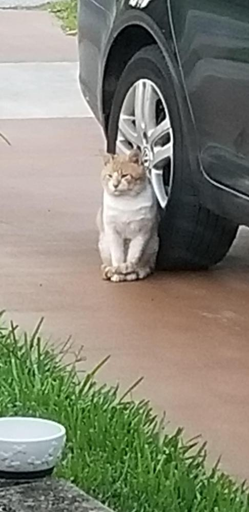 Found/Stray Unknown Cat last seen Near Johnson St & N 14th Ave, Hollywood, FL 33019