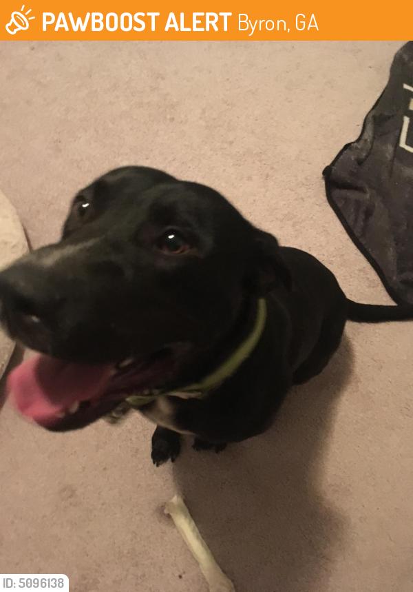 Found/Stray Male Dog last seen Near Buckskin Trail, Byron, GA, USA, Byron, GA 31008