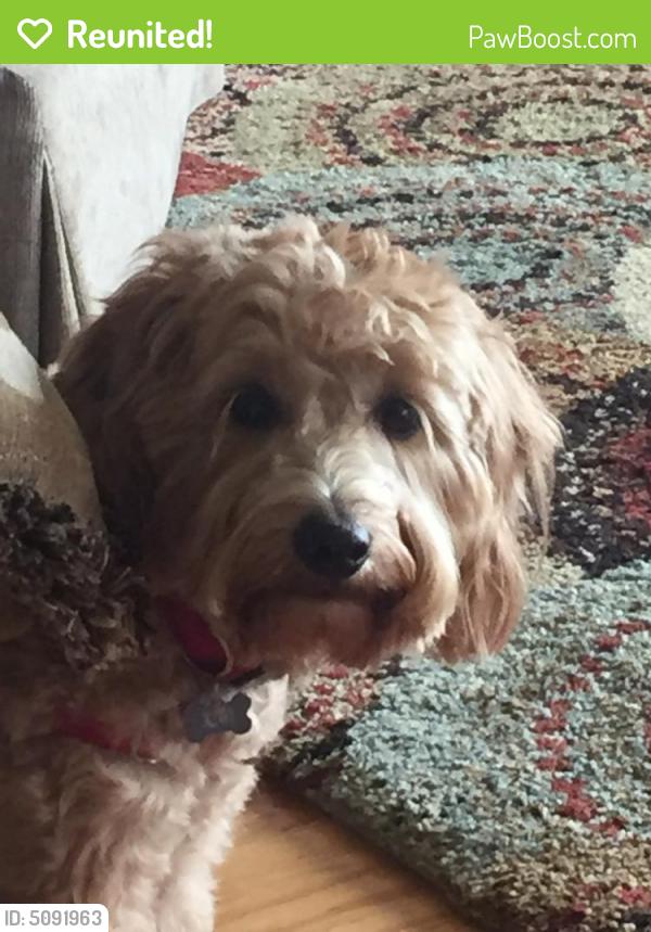 Reunited Female Dog In Spokane Wa 99203 Id 5091963
