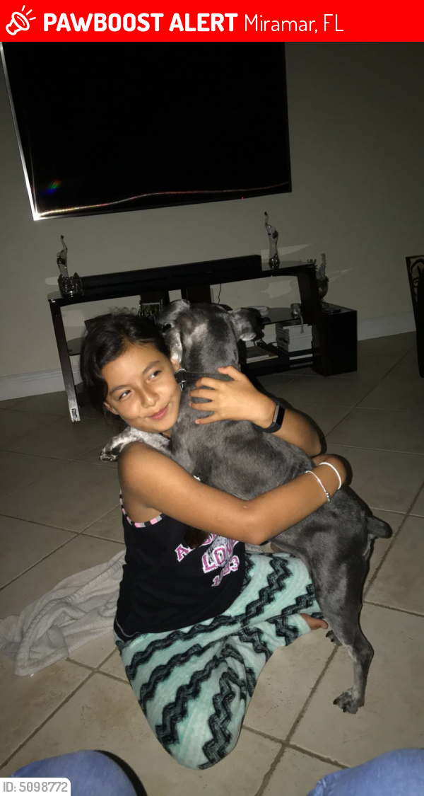 Lost Male Dog last seen Near Southwest 120th Avenue, Miramar, FL, USA, Miramar, FL 33025