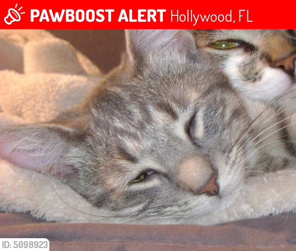 Lost Female Cat last seen Near Weeping Willow Way & Oysterwood Ct, Hollywood, FL 33019