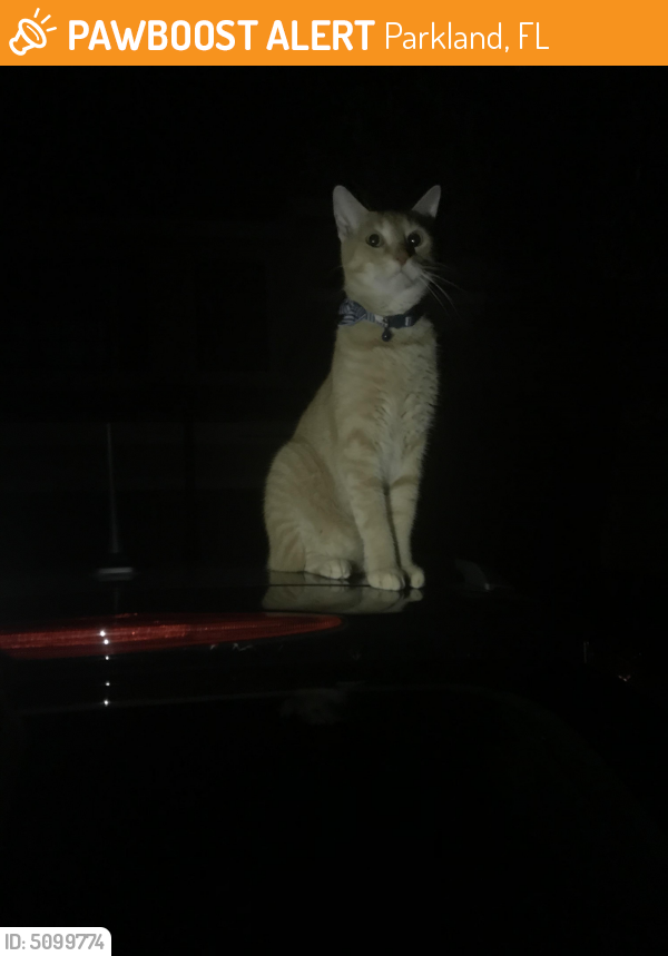 Found/Stray Unknown Cat last seen Near NW 74th Pl & NW 110th Dr, Parkland, FL 33076