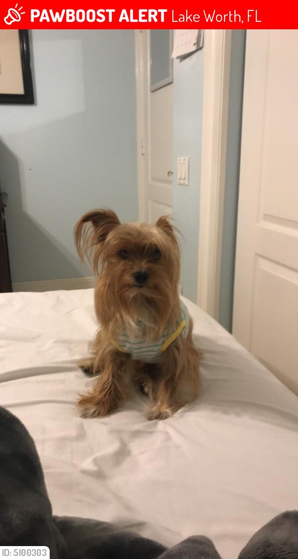Lost Male Dog last seen Near Raceway Road, Lake Worth, FL, USA, Lake Worth, FL 33449