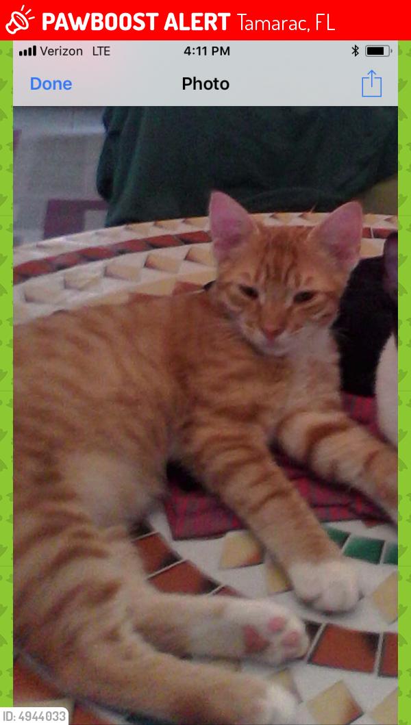 Lost Male Cat last seen Near NW 55th St & NW 50th Ave, Tamarac, FL 33319