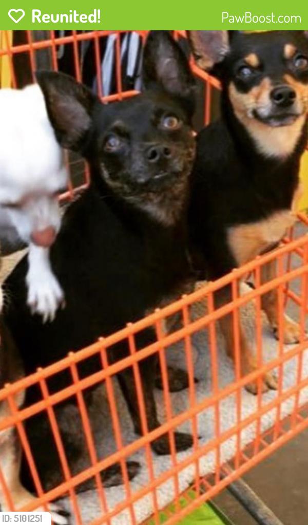 Reunited Male Dog last seen Near Goldenwest St & Warner Ave, Huntington Beach, CA 92647