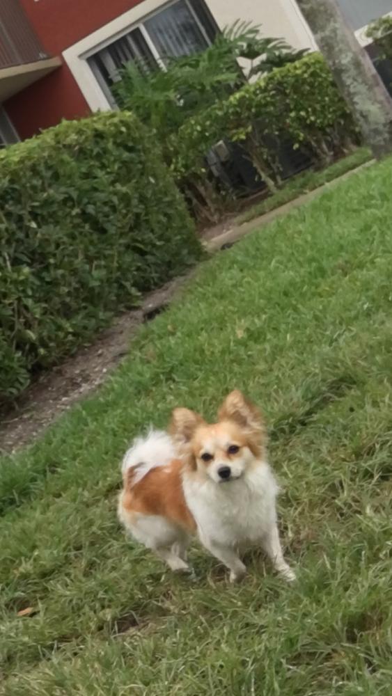 Lost Male Dog last seen Near Boca Rio Rd & W Palmetto Park Rd, Boca Raton, FL 33433