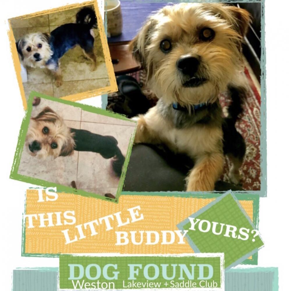 Found/Stray Male Dog last seen Near Lakeview Dr & Saddle Club Rd., Weston, FL 33326