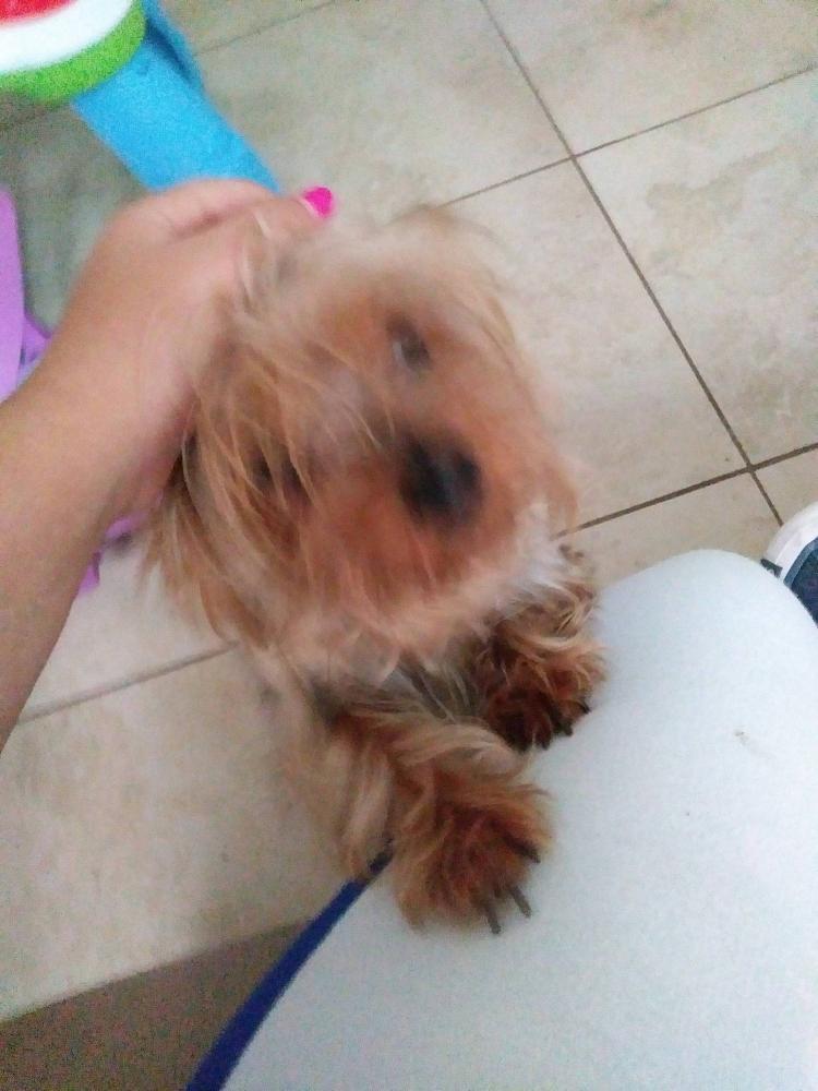 Lost Female Dog last seen Near NW 149th St & NW 4th Ave, Miami, FL 33168