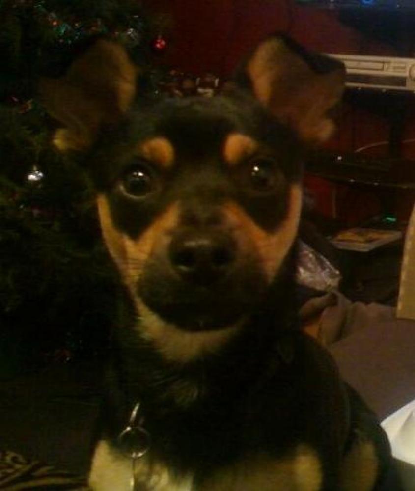 Lost Male Dog last seen Near N 72nd Ave & W North Ln, Glendale, AZ 85381