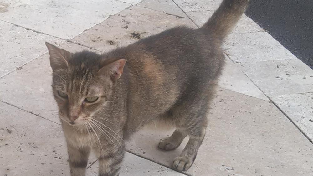 Found/Stray Unknown Cat last seen Near N Ocean Dr & north beach, Hollywood, FL 33019