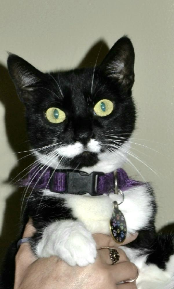 Lost Female Cat last seen Near Lantana Rd & jog road , Lake Worth, FL 33463