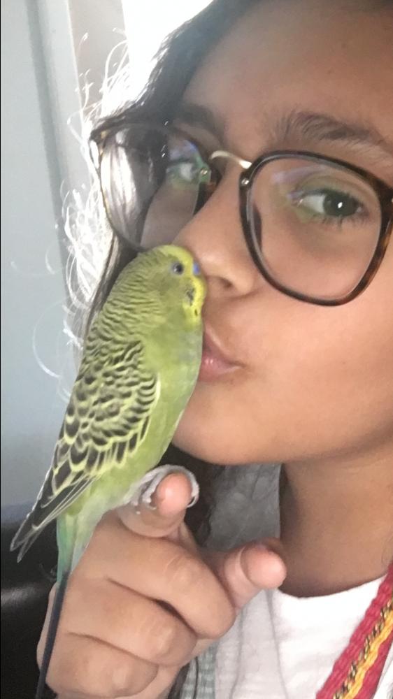 Lost Female Bird last seen Near NE 11th St & NE 25th Ave, Fort Lauderdale, FL 33304