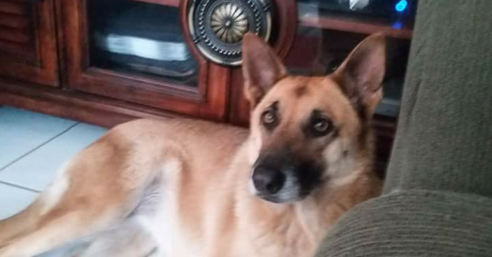 Lost Female Dog last seen Near SW 2nd Ct & SW 28th Ave, Fort Lauderdale, FL 33311