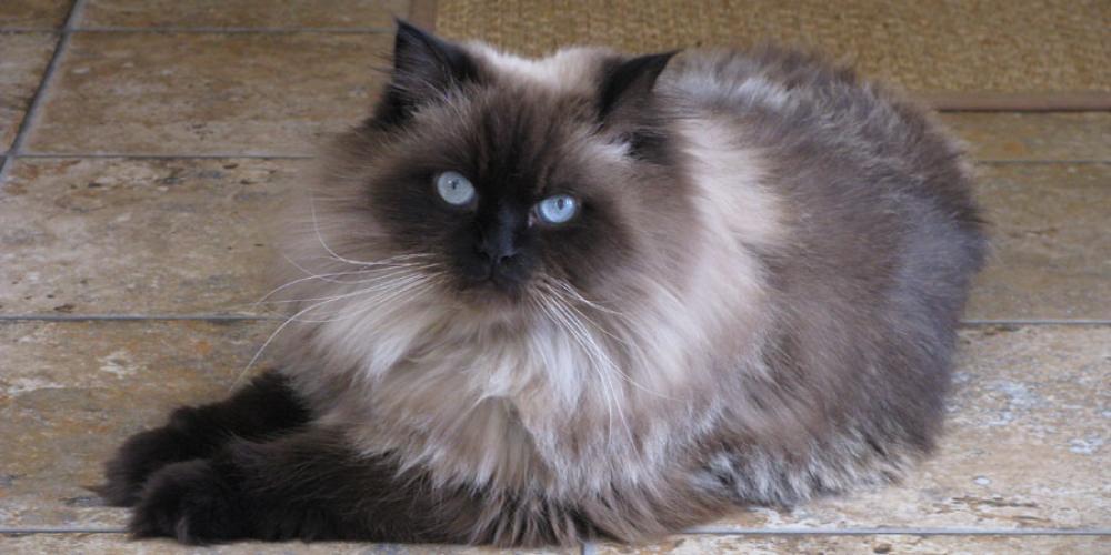 Lost Male Cat last seen Lake Jackson Dr./ Near Hillcrest Estates, Manassas, VA 20110