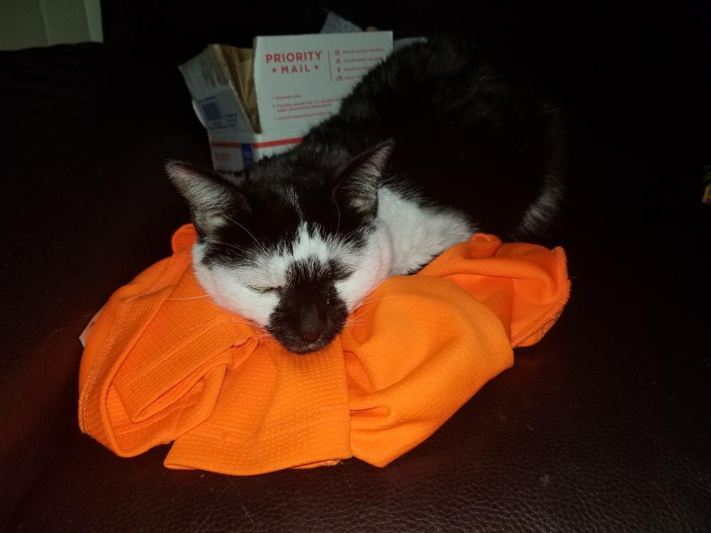 Lost Female Cat last seen Military and 5th deerfield beach , Deerfield Beach, FL 33442