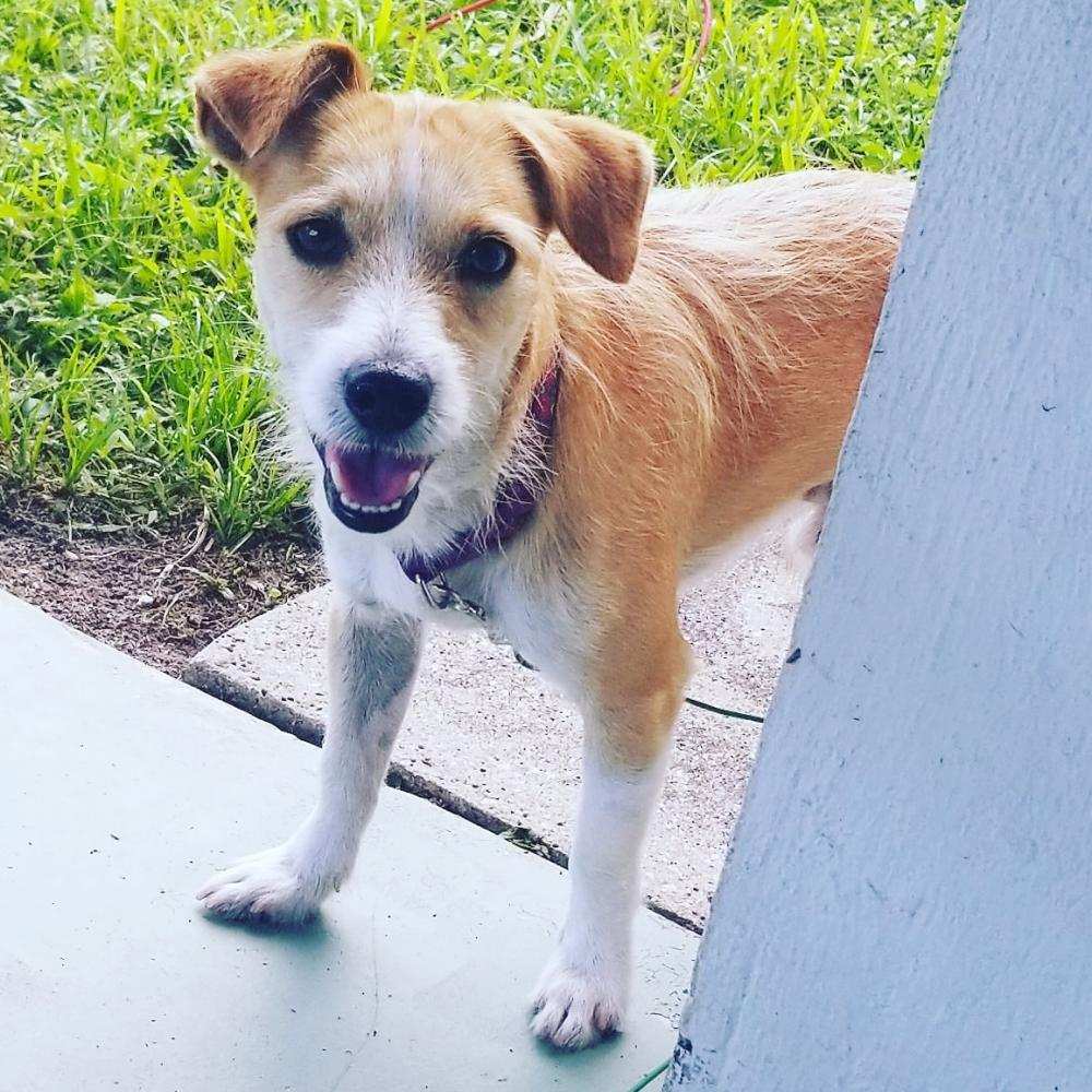 Found/Stray Male Dog last seen Near Eaton St & NW 76th Ave, Hollywood, FL 33024