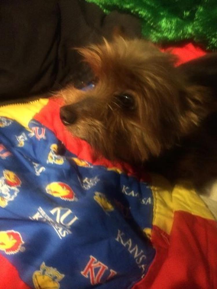 Lost Male Dog last seen Near Spruce St & S 15th St, Leavenworth, KS 66048