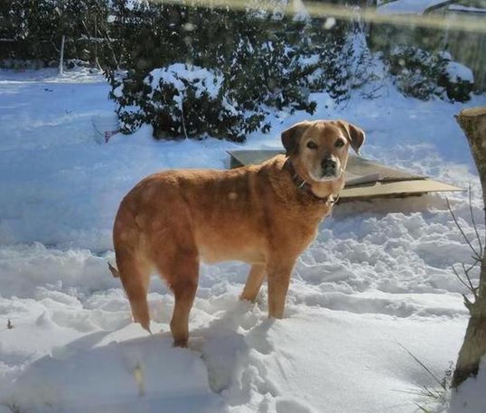 Lost Female Dog last seen Near Grouse Rd & Bob White Ln, Summerville, SC 29485