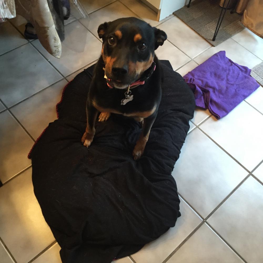 Lost Female Dog last seen Near Jackson Ave N & Woodlawn Ave, Saint James, NY 11780