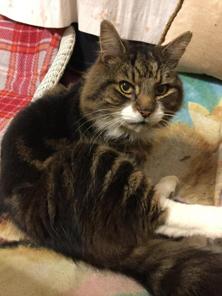 Lost Male Cat last seen Near Headswell Avenue, Bournemouth, England BH10 6JZ