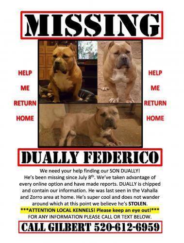Lost Male Dog last seen Near W Zorro Rd & S Vahalla Rd, Tucson, AZ 85757