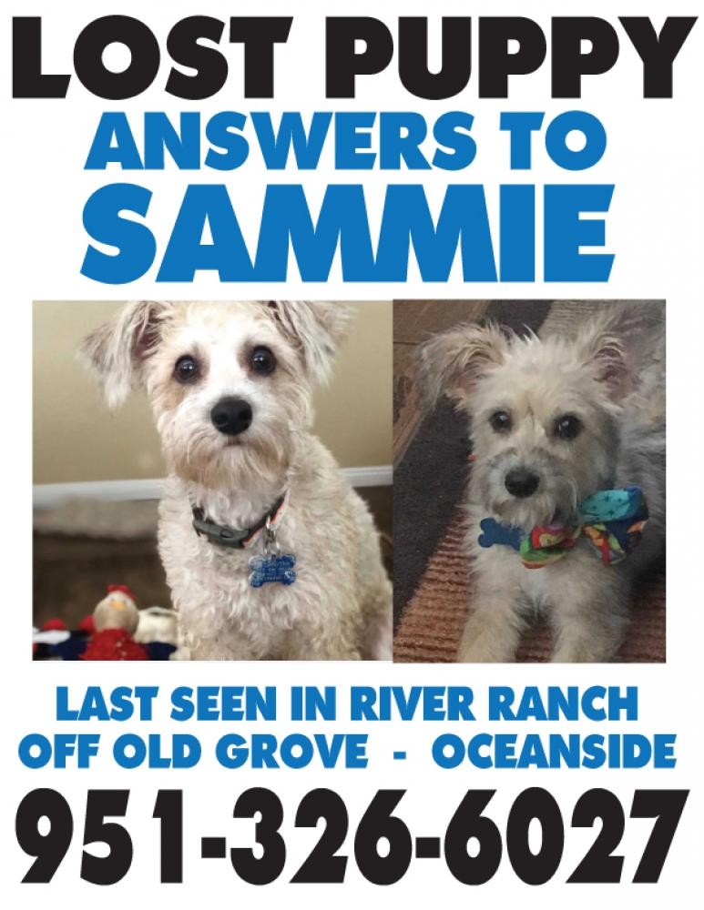 Lost Male Dog last seen Near Spring Canyon St & Meadow Spring St, Oceanside, CA 92057