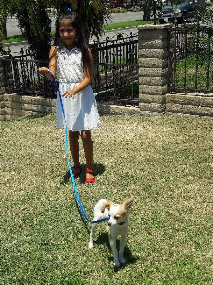 Lost Male Dog last seen Near Coyote Ct & Arcadia Ave, Vista, CA 92084