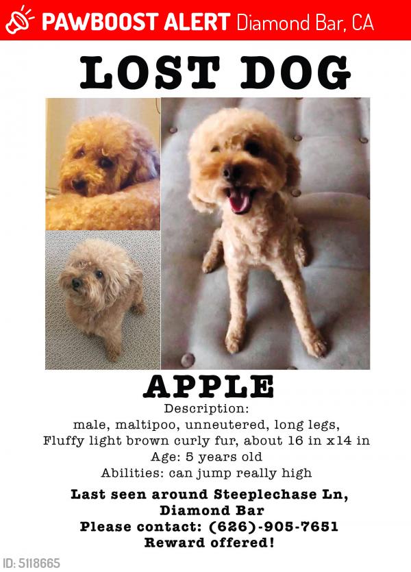 81e464816 Lost Male Dog last seen Near Steeplechase Ln & Water Course Dr, Diamond Bar,