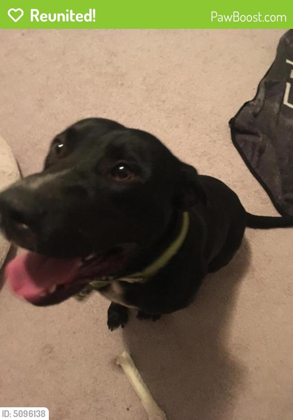 Reunited Male Dog last seen Near Buckskin Trail, Byron, GA, USA, Byron, GA 31008