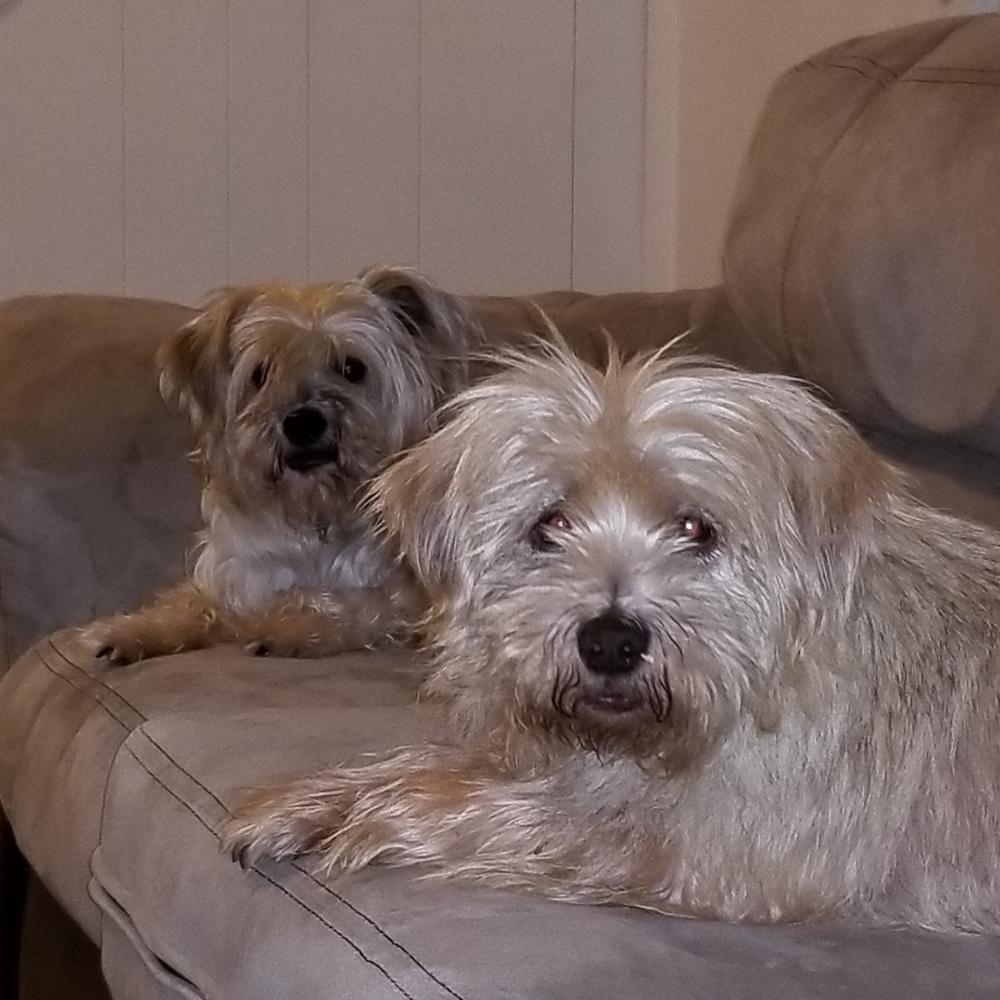 Lost Male Dog last seen Near Coventry Rd & Parliament Dr, Virginia Beach, VA 23462