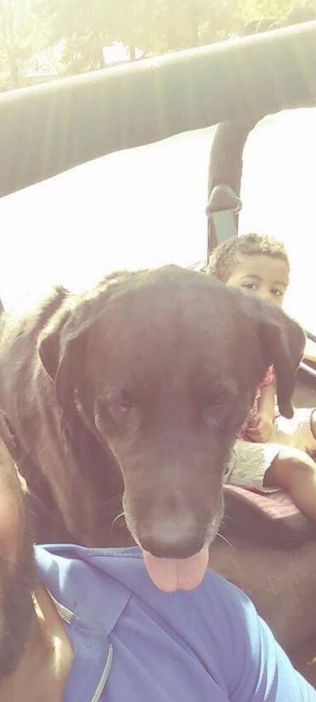 Lost Male Dog last seen 43rd st & Cuyamaca Ave, Chula Vista, CA 91911